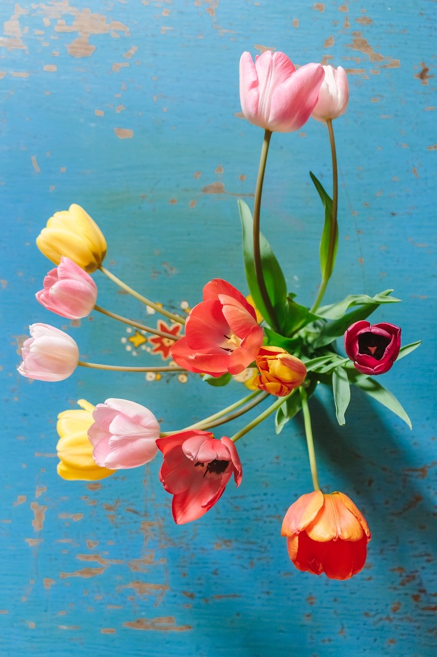 tulips, colorful, flowers